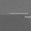 研究人员让呼吸链质子泵在人造聚合物膜中起作用
