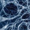 研究人员发现视神经中的干细胞能够保持视力