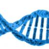 细胞中的侦探工作 科学家发现一种新的RNA修饰酶
