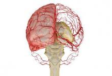 人小脑几乎占大脑皮层表面积的80%