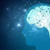 对9至11岁的孩子进行脑部扫描可提供有关攻击性