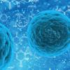 细胞松弛其膜以控制蛋白质分选