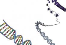 科学家发现正常的DNA修复过程可能成为癌症突变的主要来源