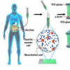 帮助发现胃癌细胞的新方法