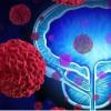 研究人员发现健康饮食与降低前列腺癌风险之间存在联系