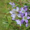 研究阐明了重要植物群的亲属关系