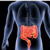 研究人员使用患者特异性肿瘤类器官来优化阑尾 结肠肿瘤的化疗