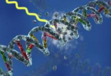 特定的基因损伤也可以保护唐氏综合症的人