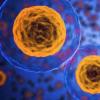 研究人员表征了组织炎症 纤维化和再生的重要调节剂