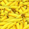 数学建模如何帮助消除香蕉束顶病毒