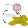 了解下肿瘤干细胞是肿瘤发生、发展的源泉