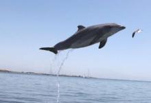 海豚研究显示哺乳动物的老化速度不同
