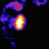 研究人员开发出选择性的化学生成致动器来快速控制神经元的活动和行为