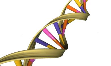 蛋白质如何阻止细胞攻击自己的DNA