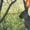 研究人员推翻了哺乳动物听觉系统敏感性的假说
