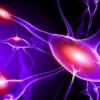 研究重点在于随着时间的流逝会在儿童中发展的遗传神经系统疾病