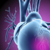 研究揭示了黏附素功能参与癌症和心脏发育的机制