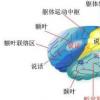 神经科学家发现有助于确定信息优先级的特定大脑区域