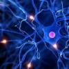 研究检查了使用解码的神经反馈控制疼痛的可行性