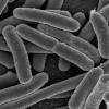 靶向铁的吸收以创建针对UTI的新型抗生素