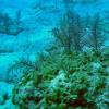 设计师细菌产生珊瑚抗生素