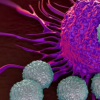 激活免疫蛋白STING的分子显示出对肿瘤有希望的结果