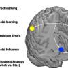 神经科学家描述人脑中的社会决策