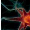 研究可能有助于了解动物和人类神经系统的进化