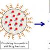 纳米粒子可以利用肿瘤的弱点来选择性地攻击癌症
