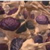 灵活的靶标可帮助免疫系统产生微调的抗体