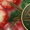 口腔细菌可能会破坏阴道微生物组的平衡