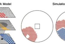 哺乳动物的闭眼视网膜中的自发性神经活动波