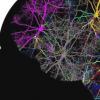 新形式的大脑分析首次吸引全脑