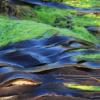 使用集光聚合物加速藻类的光合作用