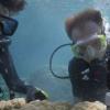 海洋酸化导致标志性珊瑚礁上的珊瑚骨质疏松