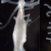 环境和微生物组如何共同塑造人体