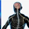 新方法提供了联系神经系统和运动功能障碍的路线图