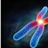 研究人员解决了X染色体失活的长期谜团