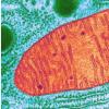 科学家们希望利用细胞回收工具来治疗帕金森氏病