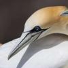 常见物种反映了稀有动物对全球变化的反应