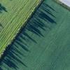 微塑料对土壤生物的影响