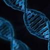 研究人员发现新的神经药物靶标