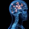新模型可洞悉大脑如何了解信息
