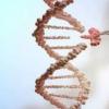 推出新的Gyrolab AAVX滴定试剂盒以支持发育细胞和基因疗法