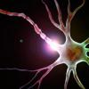 究确定了神经元功能和存活的重要调节剂