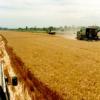 粮食系统转型可能需要前所未有的全球合作水平