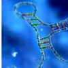 研究人员确定有助于肺癌免疫逃逸的RNA分子