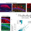 研究突出了星形胶质细胞在远程记忆形成中的作用