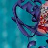 新的结构单元简化了蛋白质定制设计的过程