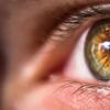 研究人员在细胞水平上可视化视网膜的功能